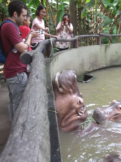 Photographing hippos in Chiang Mai zoo.