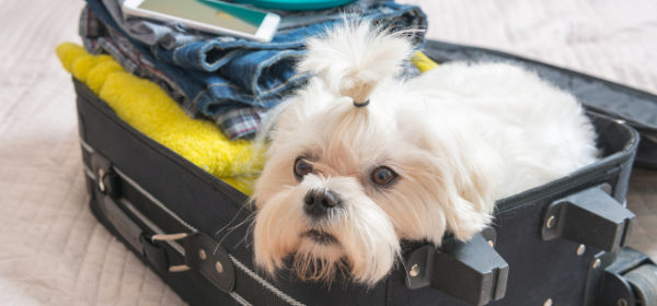 what to pack for dog friendly uk holidays
